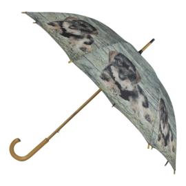 paraplu Teckel ruwhaar puppy