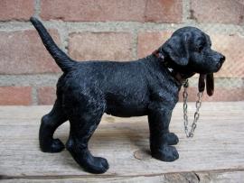 beeldje Labrador zwart met riem staand