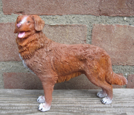 beeldje Nova Scotia Duck Tolling Retriever