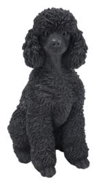 beeld Poedel zittend zwart | 31 cm