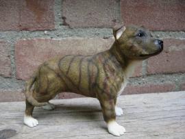 beeldje Staffordshire Bull Terriër brindle