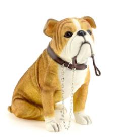 beeldje Engelse Bulldog met riem zittend