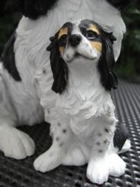 beeld Cavalier King Charles met pup tricolour