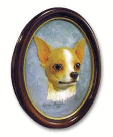 portret/kop Chihuahua korthaar