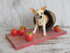 beeldje Chihuahua korthaar met appeltjes