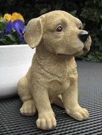 beeldje Labrador blond puppy