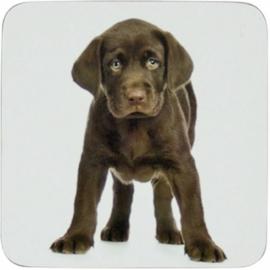 onderzetters Labrador chocolate