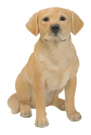beeld Labrador blond zittend   40 cm