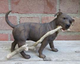 beeldje Staffordshire Bull Terriër met tak brindle