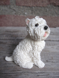 miniatuur West Highland White Terrier