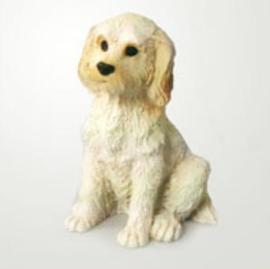 miniatuur Labradoodle blond