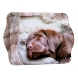 dienblaadje Labrador chocolate