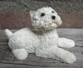 miniatuur West Highland White Terriër liggend