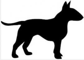 Bull Terrier zie: Engelse Bull Terrier