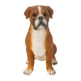 beeldje Boxer | 24 cm