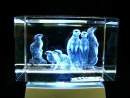3D laserblokje/glasblokje Stokstaartjes
