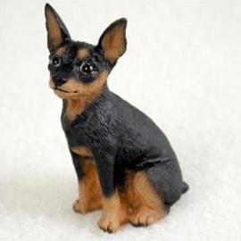 miniatuur Dwergpincher black & tan