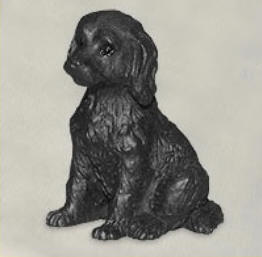 miniatuur Labradoodle zwart