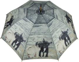 paraplu Mopshond en Franse Bulldog puppy's