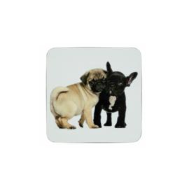 onderzetters Mopshond en Franse Bulldog puppy's
