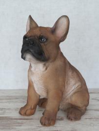 beeldje Franse Bulldog beige | 30 cm