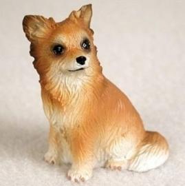 miniatuur Chihuahua langhaar