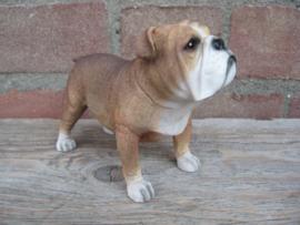 beeldje Engelse Bulldog