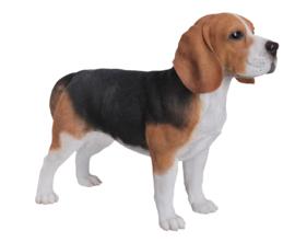 beeld Beagle staand | 55 cm