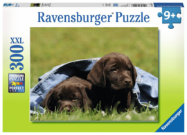 puzzel Labrador pups