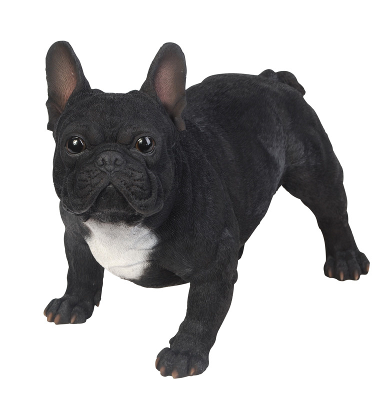 beeld Franse Bulldog zwart | 50 cm