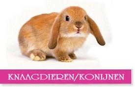 knaagdieren-konijnen.jpg