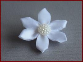 Haarklem bloem (1421)