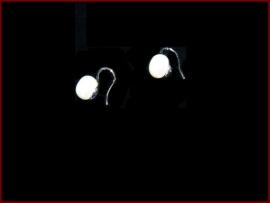 Parel oorbellen (838)