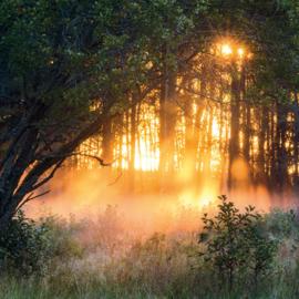 Kaart Forest Sunset