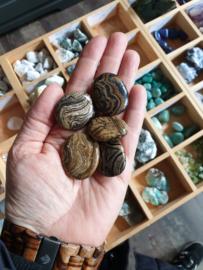 Stromatoliet Zaksteen
