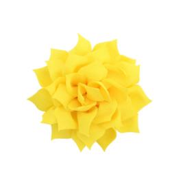 Haarbloem lotus geel