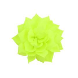 Haarbloem lotus groen
