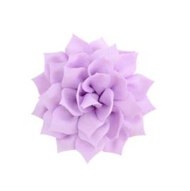 Haarbloem lotus paars
