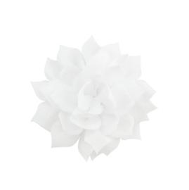 Haarbloem lotus wit