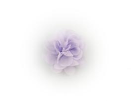 Haarbloem stof lila