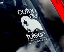 Coton de Tulear V01