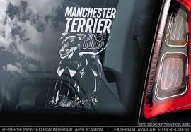 Manchester Terrier V01