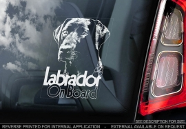 Labrador Retriever V09