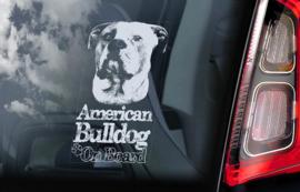 Amerikaanse Bulldog V05