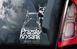 Prazsky Krysarik V01