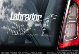 Labrador Retriever V08