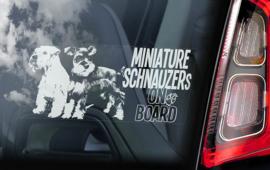 Dwerg Schnauzer - Miniature Schnauzer V10