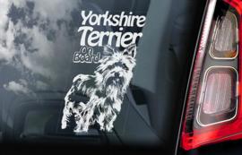 Yorkshire Terrier V02