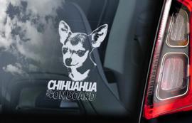 Chihuahua V11