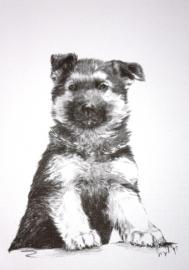 wenskaart Duitse Herder 3 (pup)